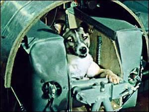 Cette chienne est célèbre pour être le premier chien à être envoyé dans l'espace. Comment s'appelle-t-elle ?