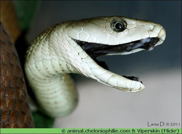 Quel serpent es tu quiz qcm reptiles serpents - Quel est le nom le plus porte au monde ...