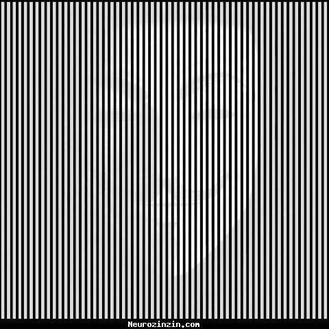 Sur cette image, que voyez-vous ?