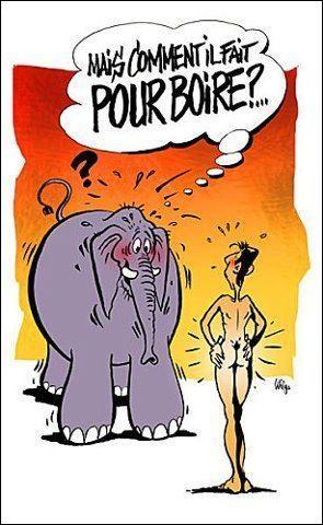 Le saut en hauteur le plus haut pour un éléphant a été mesuré à 1m50, ce qui est déjà énorme pour un animal aussi gros !