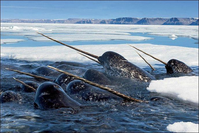 Qui peuple les océans gelés ?
