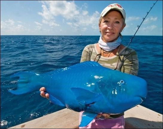 Que pensez-vous du Poisson Perroquet bleu ?