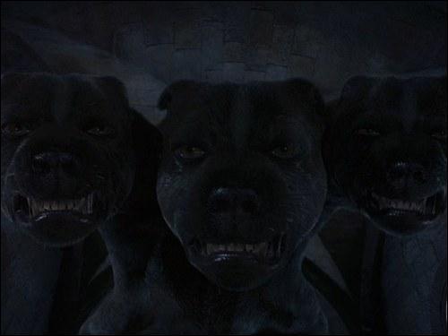 """Dans Harry Potter à l'école des sorciers, Touffu le chien géant à trois têtes, garde l'entrée d'un passage secret. Pour endormir le chien, un instrument de musique doit jouer. Quel instrument a été """"enchanté"""" pour cela ?"""
