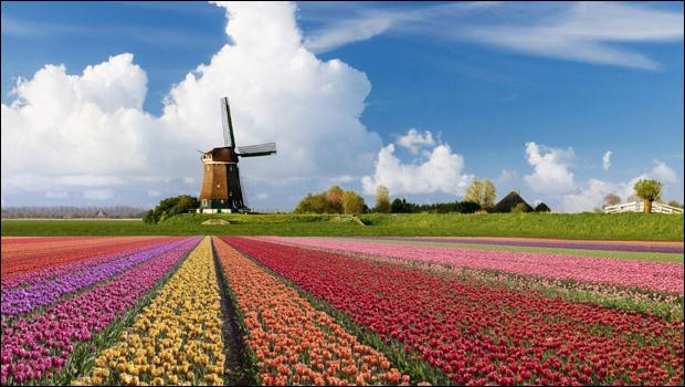 Des fleurs magnifiques, par millions, dans ce pays c'est une spécialité, mais on n'y cultive pas que ça, d'autres plantes y sont en vente, beaucoup plus ... planantes !