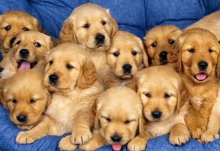 Les chiens - Vrai ou faux ?
