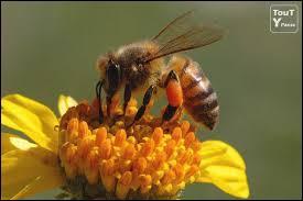 Il est déguisé en abeille et parle un peu italien ou espagnol.
