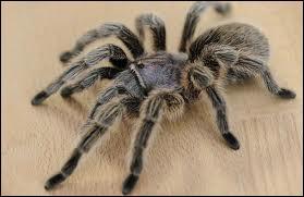 Combien une araignée a-t-elle de paires de pattes ?