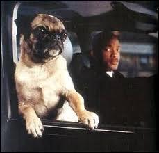 """Quel est le nom du chien que l'on aperçoit dans les films """"Men in black"""" ?"""