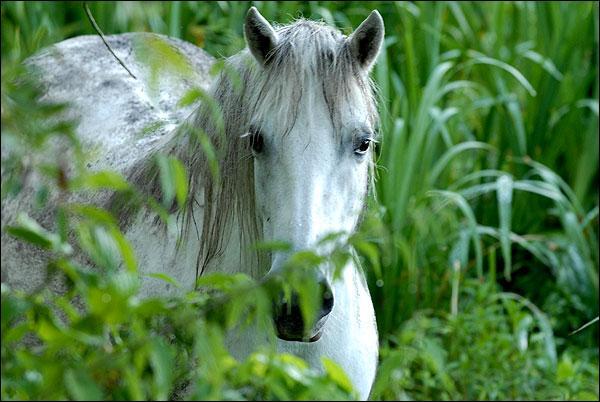 C'est une citation anonyme, empreinte de sagesse : A vieux cheval, jeune cavalier, à ... cheval vieux cavalier !