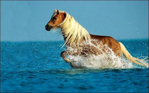 Et faites à l'identique avec ce proverbe géorgien : Le chanceux perd sa femme, le ... perd son cheval !