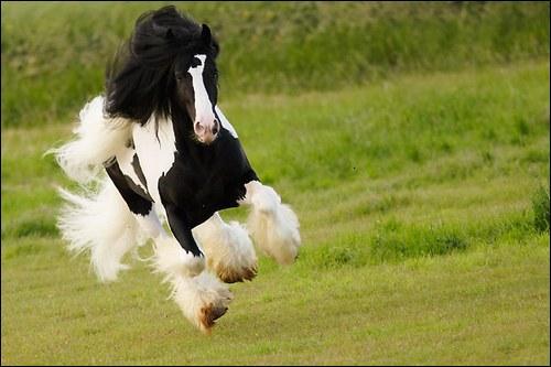 Abraham Lincolm avait lui, une autre citation concernant le cheval : Je peux nommer un général en cinq minutes, mais un bon cheval est difficile à ...
