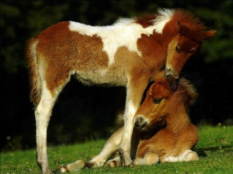 Ici il s'agit d'un proverbe turkmène : Le cheval est pour l'homme comme les ... pour l'oiseau !