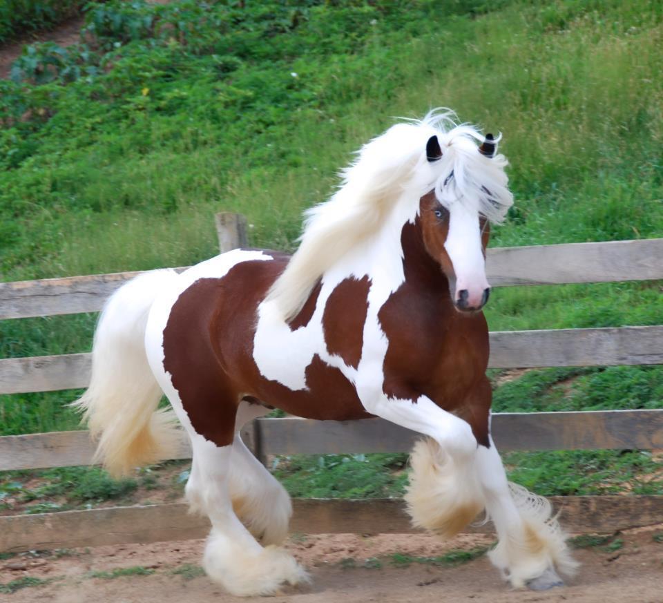 La plus noble conquête du cheval