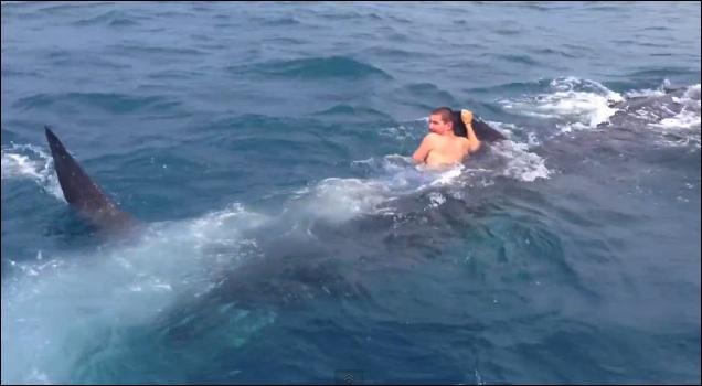 Le plus grand poisson vivant actuellement est le grand requin blanc !