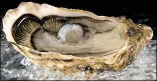 Combien de perles produit une huître au cours de sa vie ?