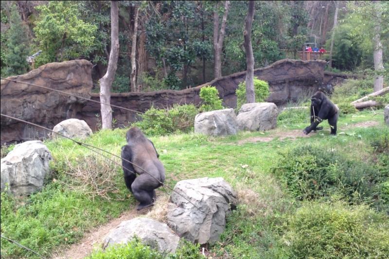Il paraît qu'ils ont beaucoup de points communs avec nous, reconnais-tu ces primates ?