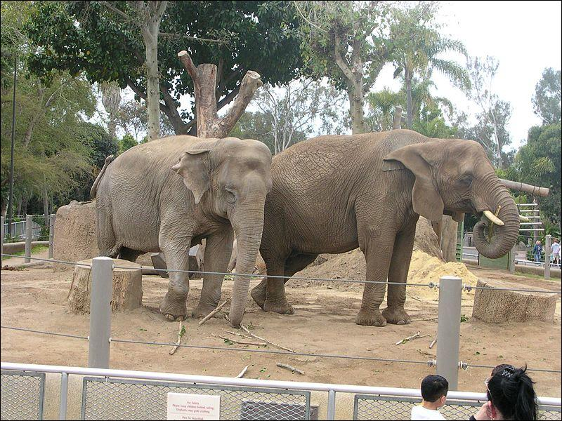 Voici deux éléphants, je suis sûr que tu vas les reconnaître, en partant de gauche à droite, surtout si tu agrandis la photo !