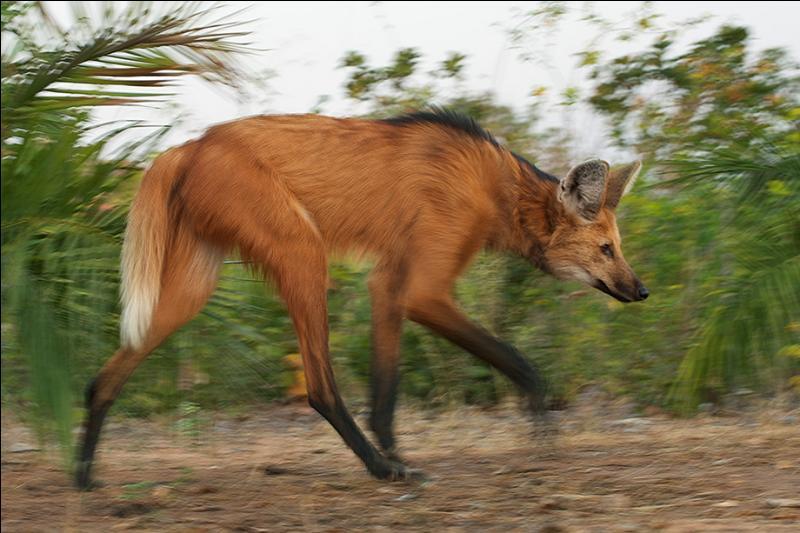 Comme tu as un oeil de lynx, tu vas certainement reconnaître cet animal !