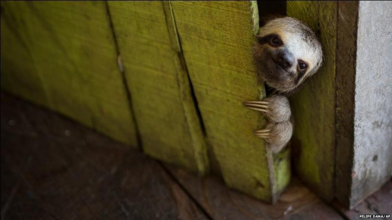 Si tu reconnais cet animal, tu dois savoir où il vit !