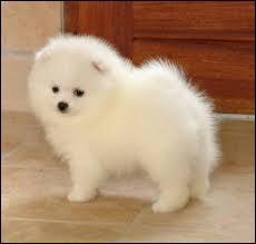 A quelle race appartient ce chien ?