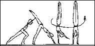 Plus facile quand on sait marcher sur les mains. Cet élément se réalise assez facilement avec un bon équilibre. Comment s'appelle-t-il ?