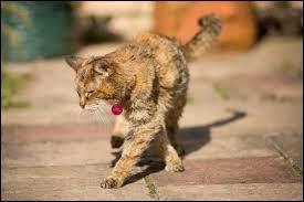 Quelle est en moyenne l'espérance de vie d'un chat ?