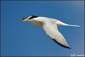 Quel oiseau a une petite taille ?