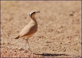 Quel oiseau porte un prénom féminin et pourrait participer aux J.O ?