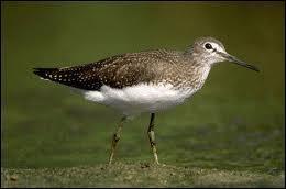 Quel oiseau a le postérieur de couleur neutre ?