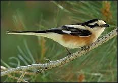 Quel oiseau tient à rester anonyme ?