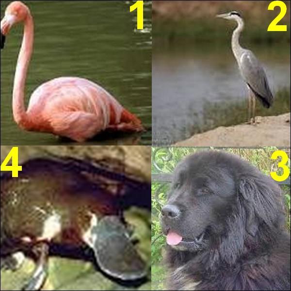 Tous ces animaux ont les pattes palmées sauf un, lequel ?
