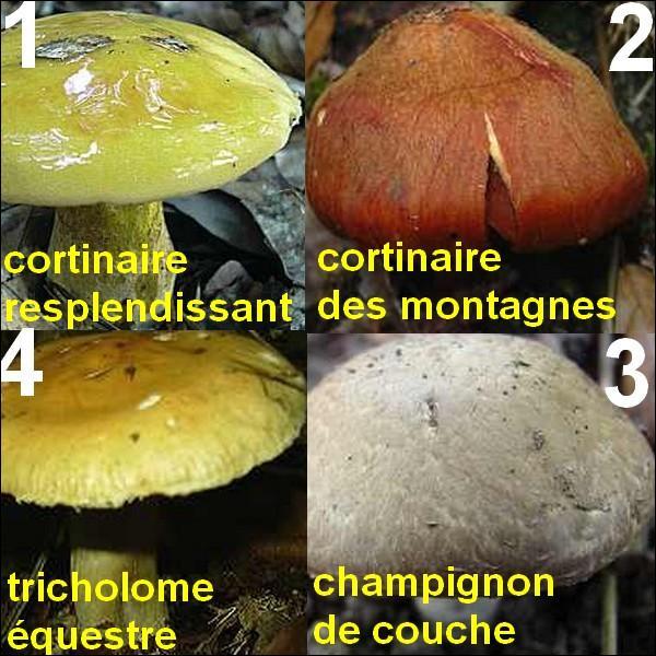 Tous ces champignons sont mortels sauf un, lequel ?