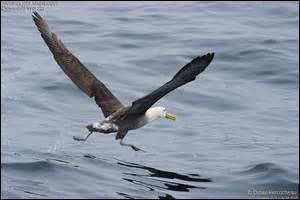 Qui écrivit l'Albatros, poème prenant pour sujet un géant des mers plutôt détesté par les marins ?