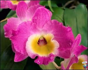 De quelle plante dit-on qu'elle est épiphyte ?