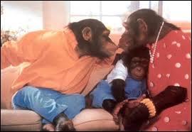 Au début des années 90, cette sympathique famille de chimpanzés nous vantait les mérites d'une marque de lessive dans une publicité. De quelle marque s'agissait-il ?