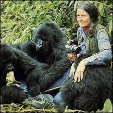"""Cette primatologue américaine, spécialisée dans le comportement des gorilles, s'est fortement engagée sur le sol rwandais pour la protection de ces primates. En 1988, sort le film """"Gorilles dans la brume"""", qui retrace cette partie de sa vie. Cette femme se nomme :"""