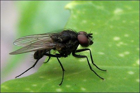 Que ne faut-il surtout pas employer pour attirer les mouches ?