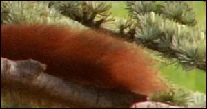 A quel animal appartient ce beau panache ?