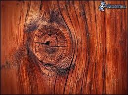 Comment appelle-t-on les excroissances très noueuses qui se développent sur les troncs d'arbre et qui sont utilisées en ébénisterie ?