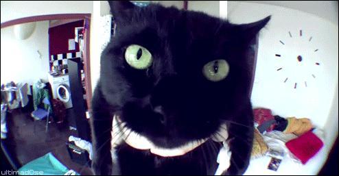 Comment s'appelle le chat de Norman ?