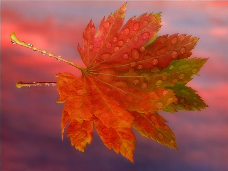 """Qui a écrit les paroles de la chanson """"Les feuilles mortes"""" ? (clip : Yves Montand)"""