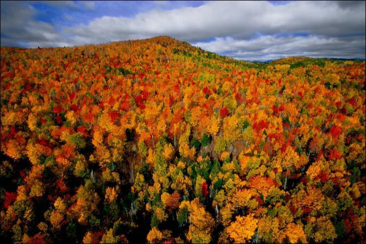 Admirez cette photographie de la forêt d'automne de Charlevoix, au Québec, prise par...