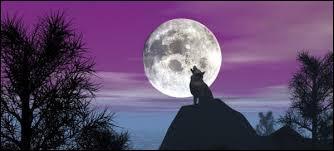 Un loup qui hurle au clair de lune est sur sa photo de profil :