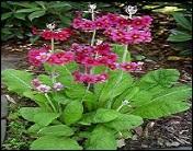 Quelle caractéristique présentent les plantes pulvérulentes ?
