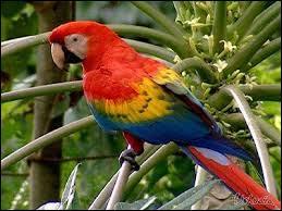 Lisez le nom de cet oiseau de droite et à gauche, c'est un mot palindrome. Bon, mais ça vous le saviez. Que peut-on dire de sa lecture ?