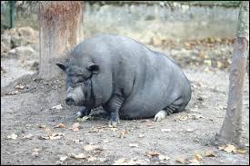 Son physique est ----, bientôt l'animal sera bon à satisfaire des appétits violents.