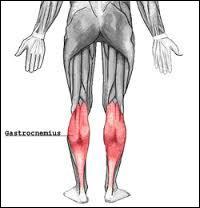 Le gastrocnémien ou muscle jumeau est un muscle de la jambe composé de 2 chefs (sous-muscles) et permet la flexion du genou. De quel ensemble de muscles le grastocnémien fait-il partie ?