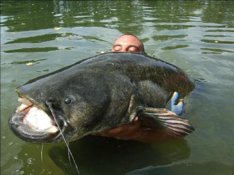 Pour terminer ce quizz, voici le géant de nos cours d'eau, il s'agit bien entendu :