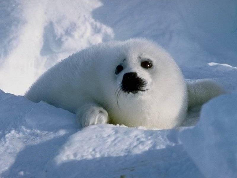 'Qui est-ce' chez les animaux de l'Antarctique