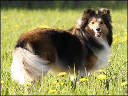 Souvenez-vous du nom de ce beau chien et dites où se trouve l'archipel qui en est à son origine.